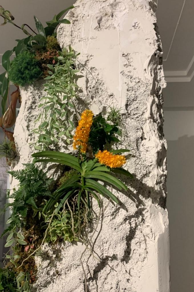 Hoa trên khối bê tông.